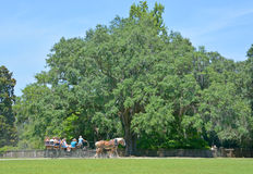 Horse carriage tours Middleton Place Stock Photography