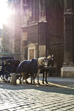 Horse Carriage in Vienna Stock Image