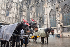 Horse carriage in Vienna, Austria. Horse carriage near St. Stephan Cathedral, Vienna, Austria Royalty Free Stock Photography
