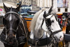 Horse carriage in Vienna, Austria with bowler on light Stock Images