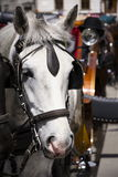Horse carriage in Vienna, Austria with bowler on light Royalty Free Stock Photos