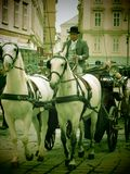 Horse and carriage in Vienna Royalty Free Stock Image