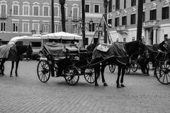 Horse carriage Royalty Free Stock Image