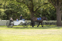 Horse-carriage, vineyard South Africa stock photography