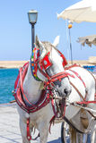 Horse carriage Royalty Free Stock Images