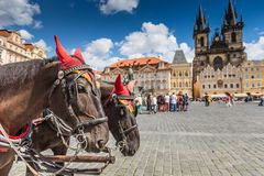 Horse Carriage waiting for tourists at the Old Square in Prague. Stock Image