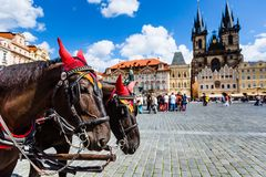 Horse Carriage waiting for tourists at the Old Square in Prague. Royalty Free Stock Photography