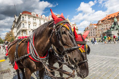 Horse Carriage waiting for tourists at the Old Square in Prague. Royalty Free Stock Photo