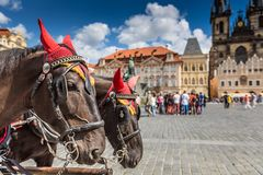 Horse Carriage waiting for tourists at the Old Square in Prague. Stock Images