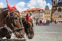 Horse Carriage waiting for tourists at the Old Square in Prague. Stock Photo