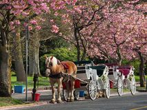 Horse carriage Royalty Free Stock Photo