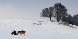 Horse carriage in winter landscape driving through Royalty Free Stock Photos