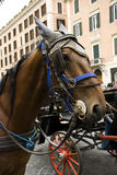 Horse carriages Stock Photography