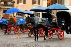 Horse Carriages Stock Images