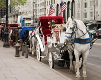 Horse carriages Stock Image