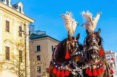 Horse carriages on main square, Krakow, Poland Stock Photography
