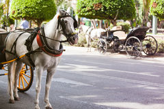 Horse carriages parked in andalusia, spain royalty free stock photo