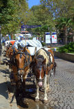 Horse carriages on street,Sozopol Bulgaria Stock Images