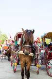Horse carriages for tourist services in  Thailand Stock Image