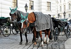 Horse carriages in Vienna, Austria, Europe Royalty Free Stock Photo