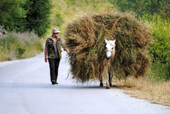 Horse carries a haystack Stock Photo