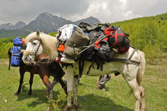 Horse carry backpacks Royalty Free Stock Photo