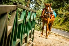 Horse carrying load on its back royalty free stock photos