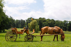 The Horse with cart. Brown horse with a cart on the meadow Royalty Free Stock Photography