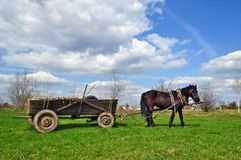 Horse  with a cart Stock Photos