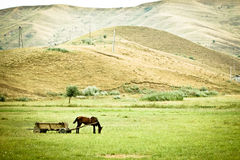 Horse and cart. In the hills of Romania Royalty Free Stock Photography
