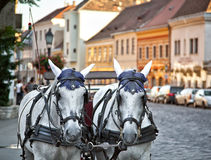 Horse cart. In the old town Stock Images