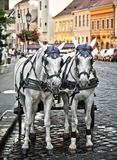 Horse cart. In the old town Royalty Free Stock Photo