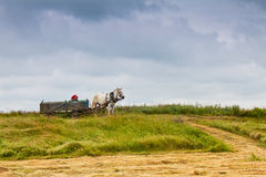 Horse and cart. Knight at the levels expected to be loaded with hay Stock Photography