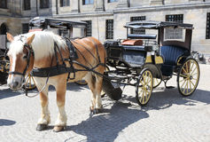 Horse and Cart. A traditional horse and cart in a street Stock Photos