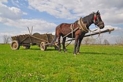 Horse with a cart Royalty Free Stock Photos