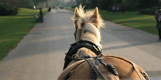 Horse and cart. Horse view from a cart Stock Photos