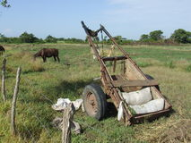 A horse and the cart. Typical cuban landscape Royalty Free Stock Photo
