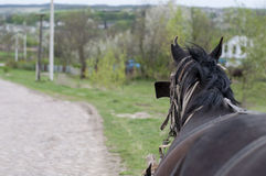 Horse with cart. Royalty Free Stock Images