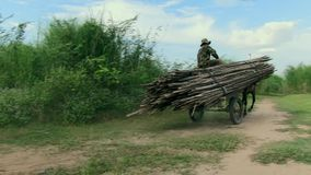 Horse cart ,  bamboo,  cambodia. Cambodia -  Koh pene island - december 2013. Men ride horse cart to transport  bamboo on path track (2 stock video footage