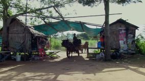 Horse cart, bamboo, cambodia, southeast asia. Southeast asia, cambodia, koh pene , december  2013. Men ride horse cart to transport  bamboo on path track (2 stock footage