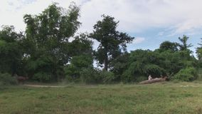 Horse cart, bamboo, cambodia, southeast asia stock video