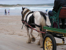 Horse and Cart on the beach. A horse and cart working at a local gala on the beach with kids rides Royalty Free Stock Photos