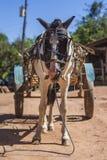 Horse Cart in Brazil Stock Image