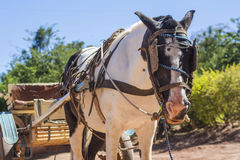 Horse Cart in Brazil Stock Photo