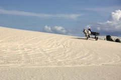 Horse Cart On A Brazilian Dune Royalty Free Stock Photography