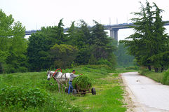 Country path horse cart bridge Royalty Free Stock Images