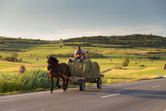 Horse cart carrying hay harvest, in Sibiu County, Transylvania Stock Image