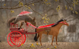 Horse cart driver Royalty Free Stock Photo