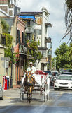 Horse cart driver rides to Jackson Stock Photography