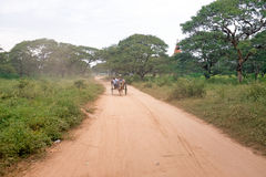Horse cart driving in Bagan Myanmar Stock Photography